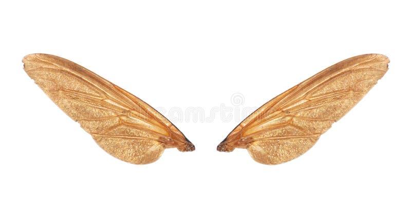 Asas do inseto da mosca foto de stock royalty free