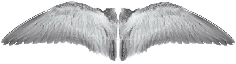 asas do pássaro ilustração stock