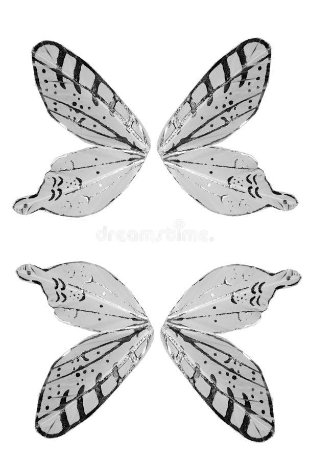 Asas isoladas do anjo da borboleta imagem de stock