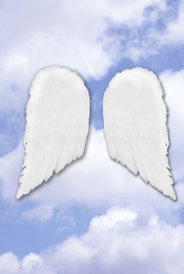 Asas separadas isoladas do anjo imagens de stock