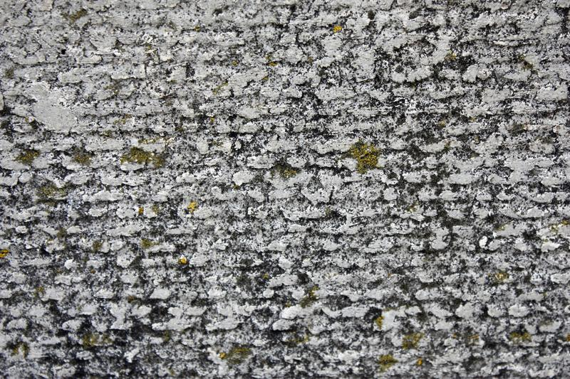 Asbestos slate concrete texture covered with lichen and moss, industrial material natural cement, close-up stock photo