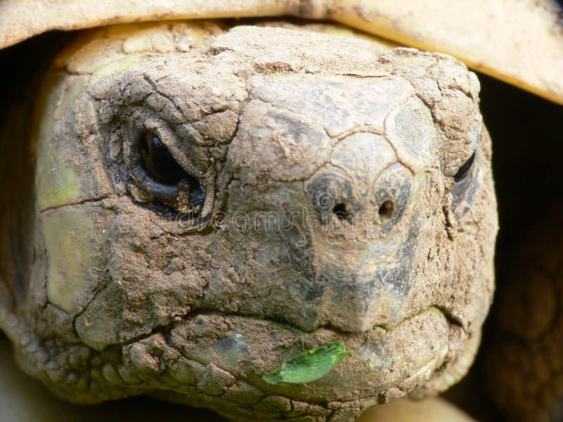 Ascendente cercano de la tortuga fotos de archivo libres de regalías