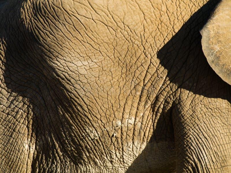Ascendente cercano del elefante fotos de archivo libres de regalías