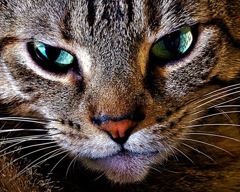 Ascendente cercano del gato foto de archivo libre de regalías