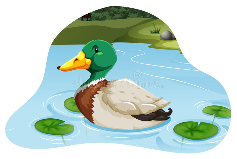 Ascendente cercano del pato silvestre ilustración del vector