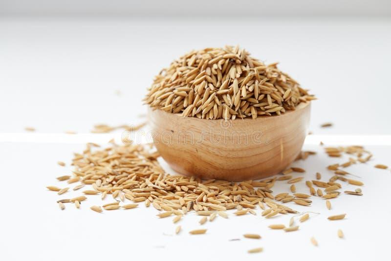 Ascendente fechado do arroz 'paddy' de Brown fotografia de stock royalty free
