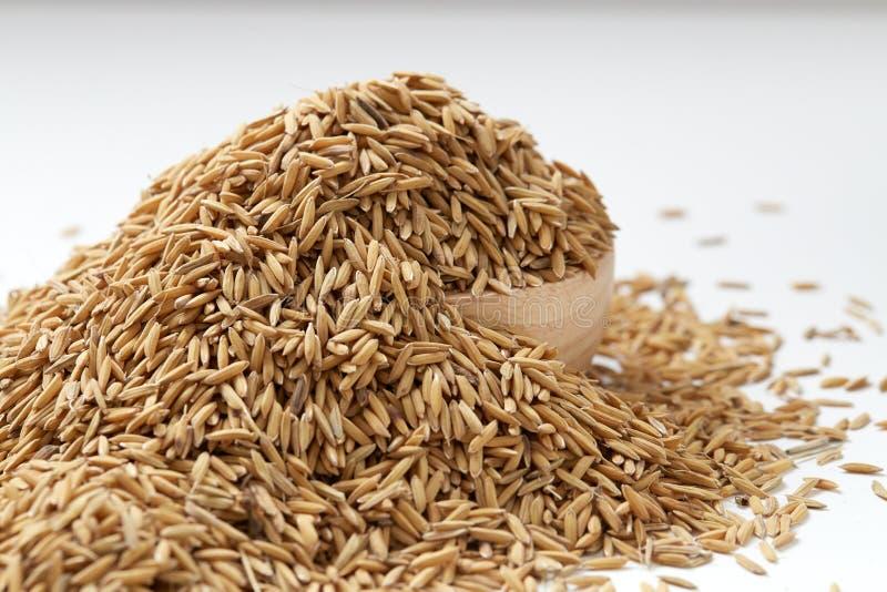 Ascendente fechado do arroz 'paddy' de Brown foto de stock