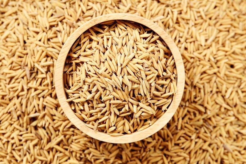 Ascendente fechado do arroz 'paddy' de Brown fotos de stock