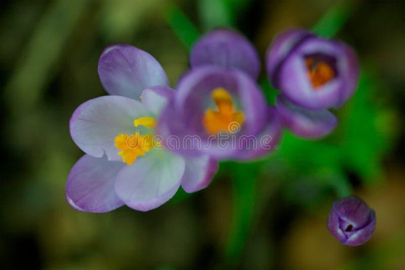 Ascendente próximo da flor imagens de stock royalty free