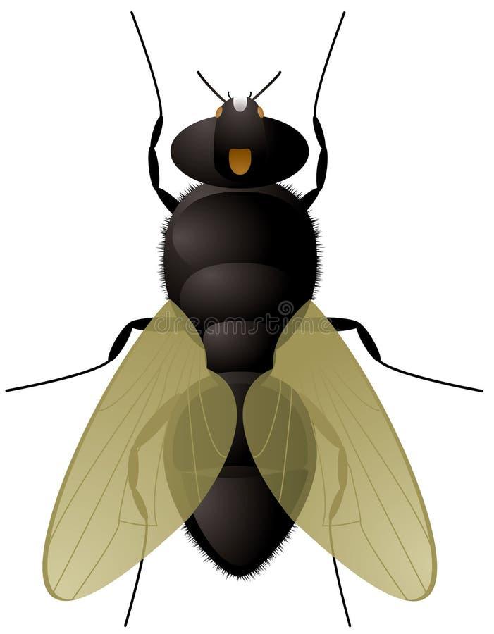 Ascendente próximo da mosca ilustração do vetor
