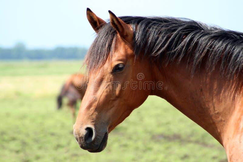 Ascendente próximo do cavalo fotos de stock royalty free