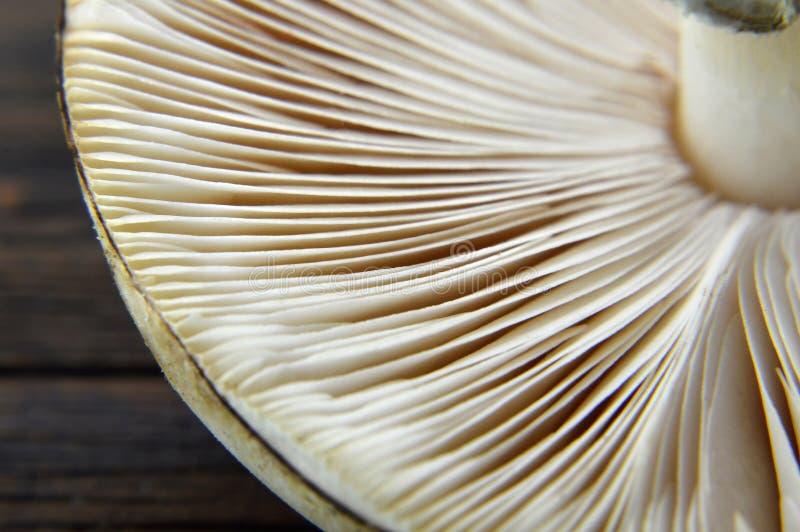 Ascendente próximo do cogumelo fotografia de stock