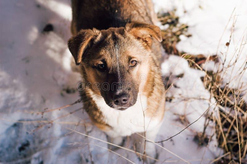 Ascendente pr?ximo do filhote de cachorro fotos de stock royalty free