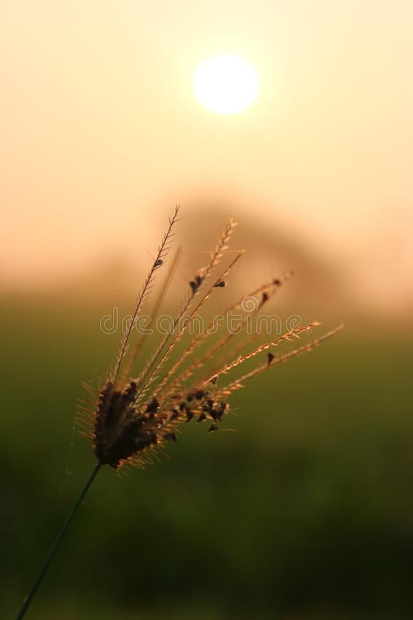 A ascensão do sol é sempre bela foto de stock