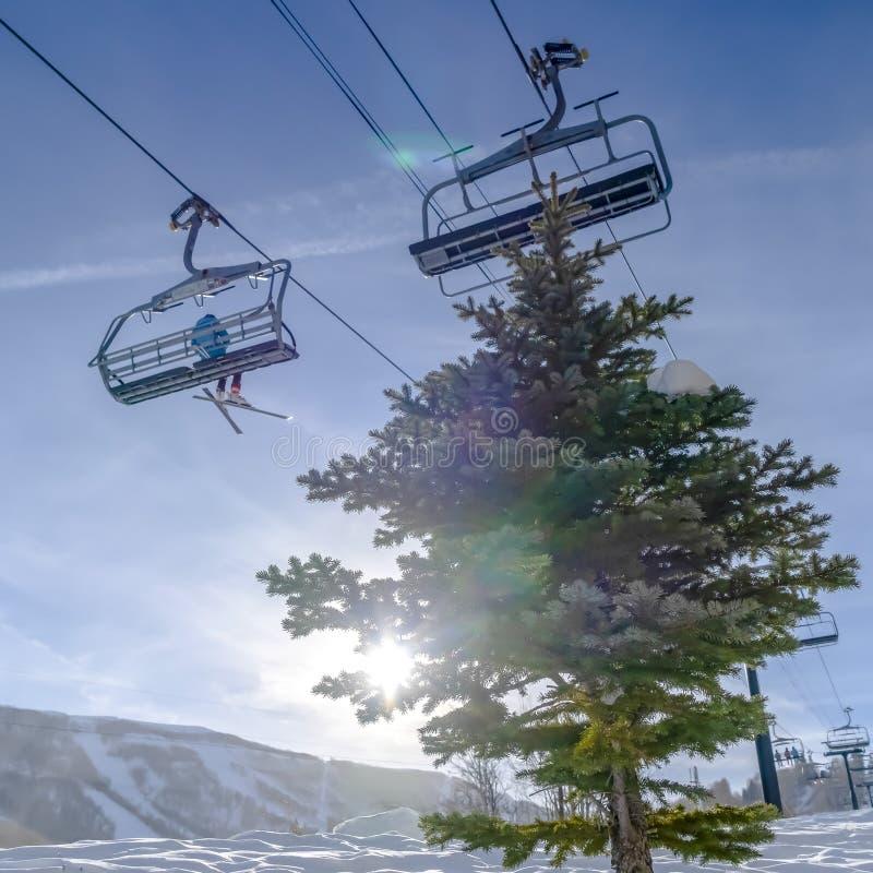 Ascenseurs de chaise au-dessus d'un arbre avec le soleil à l'arrière-plan photos libres de droits