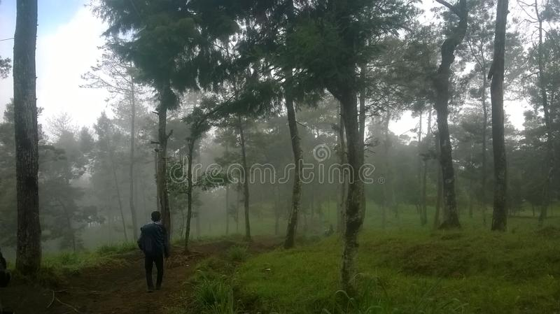 The ascent of Mount Merbabu boyolali in Central Java Mount Merbabu is one of the highest mountain in Central Java. Between the towns of magelang, Salatiga and stock photo