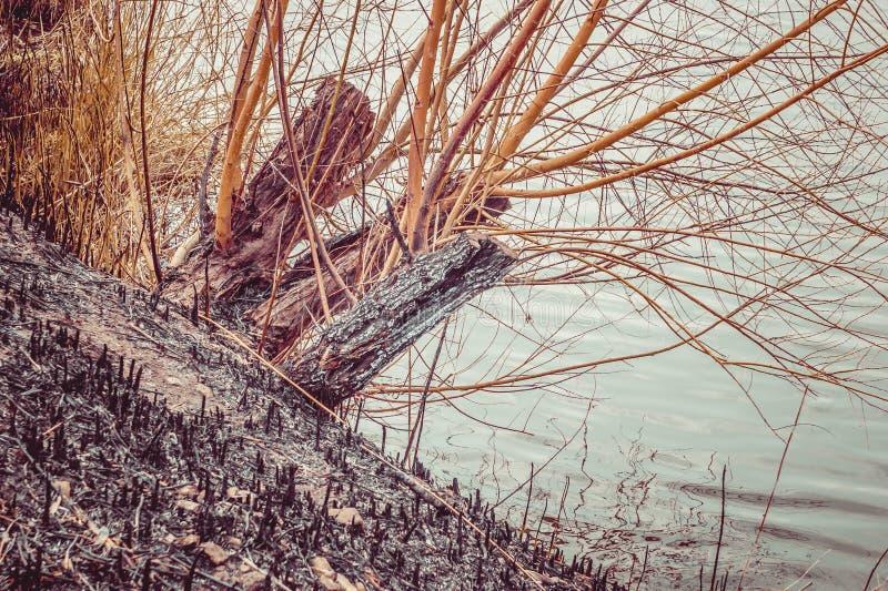 Asche in dem Fluss stockbild