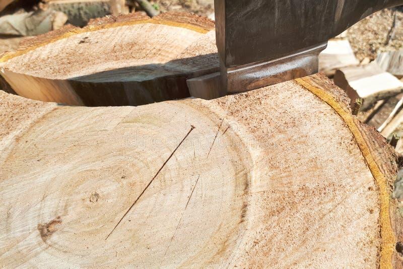 ascia attaccata in un albero scheggiato fotografie stock libere da diritti