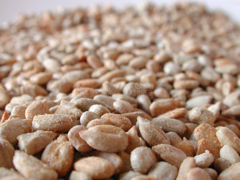 Asciughi i semi di girasole arrostiti fotografia stock libera da diritti