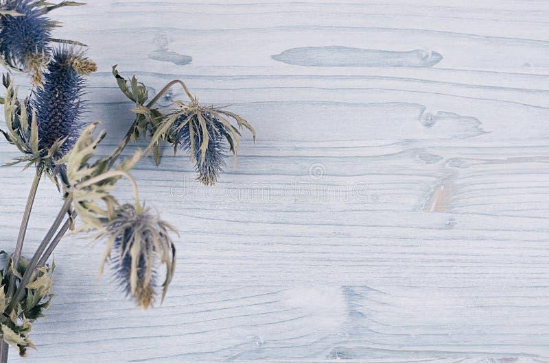 Asciughi il fiore blu sul bordo di legno blu molle leggero Fondo decorativo della molla con lo spazio della copia, vista superior immagine stock