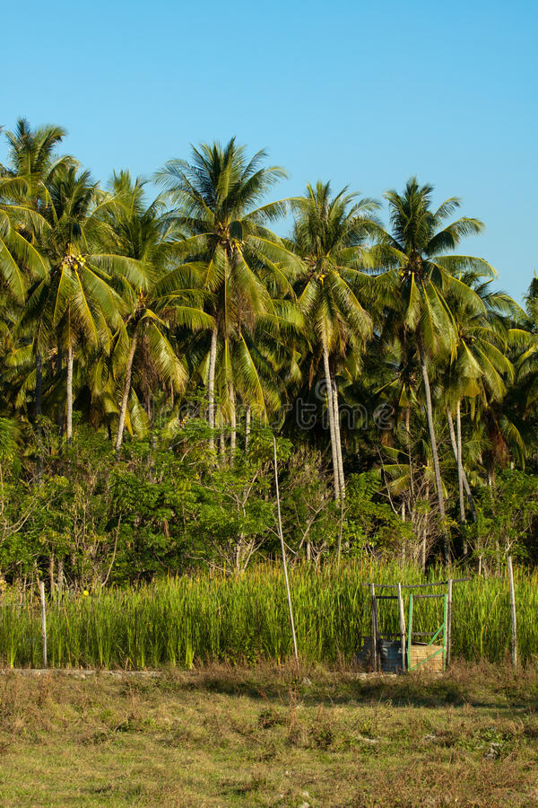 Asciughi il paesaggio uno dell'isola tropicale, il Flores Indonesia immagini stock libere da diritti