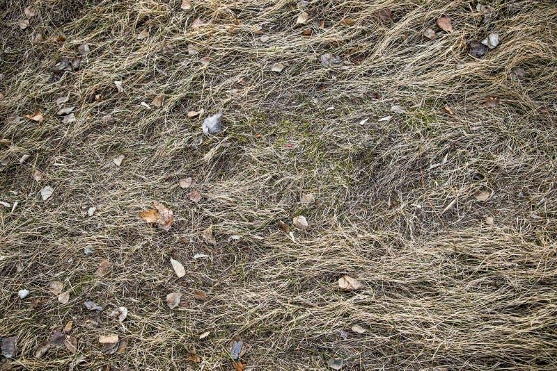 Asciughi, l'anno scorso erba del ` s E r fotografia stock