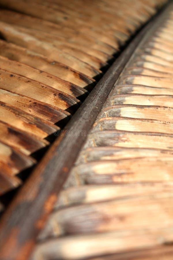 Download Asciughi La Filiale Della Palma Immagine Stock - Immagine di brown, asciutto: 7301065