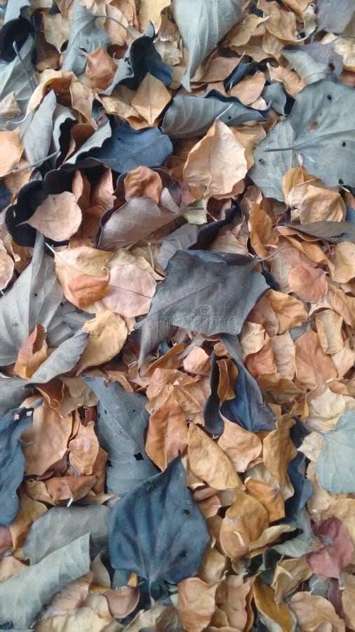 Asciughi le foglie fotografia stock