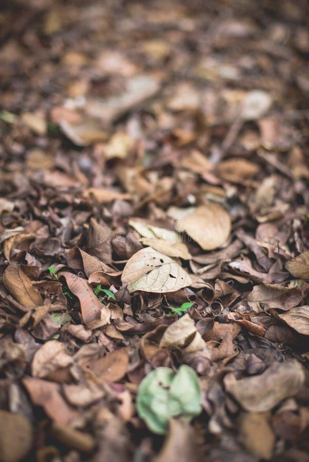 Asciughi le foglie immagine stock libera da diritti