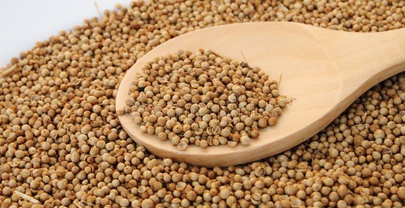 Asciutto costringa il seme nel cucchiaio di legno immagine stock