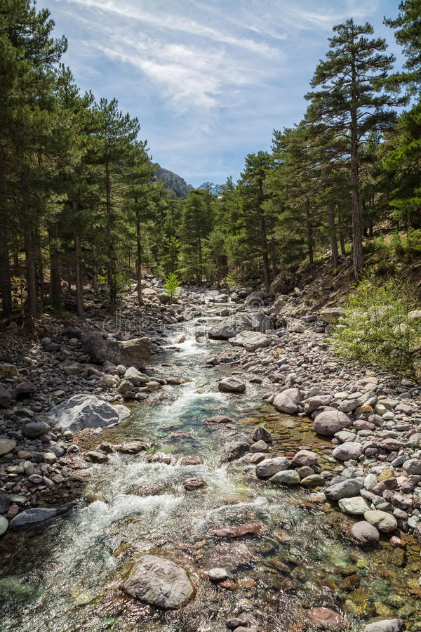 Asco river in Corsica with pine trees and snow covered mountain stock photography