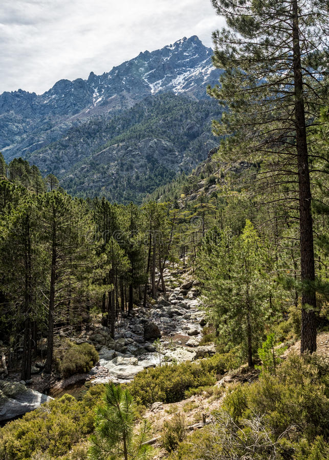 Asco river and snow capped mountain in Corsica royalty free stock photo