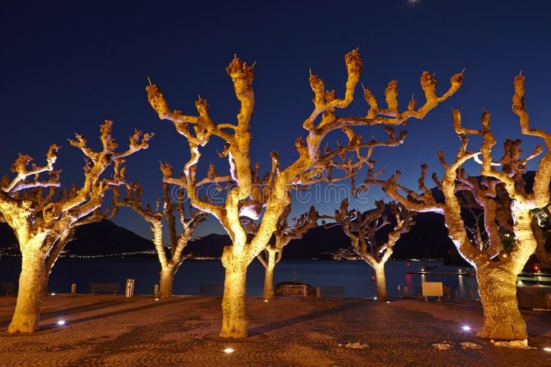 Ascona (Switzerland) - Illuminated trees royalty free stock images