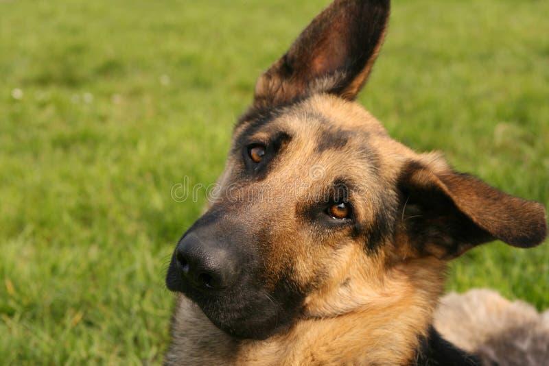 Download Ascot stock image. Image of friend, portrait, guarding - 4183563
