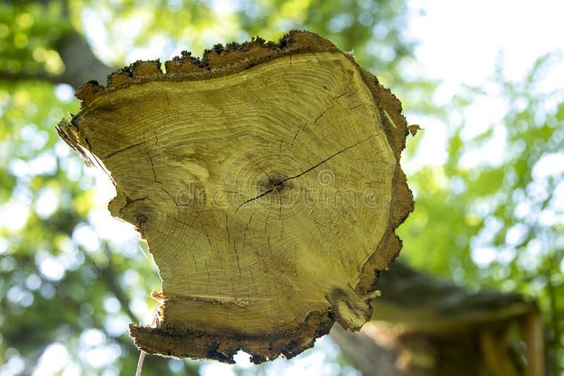 Aserrar un árbol imagen de archivo