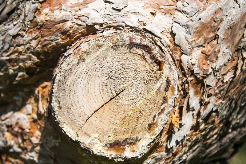 Aserrar un árbol imagenes de archivo