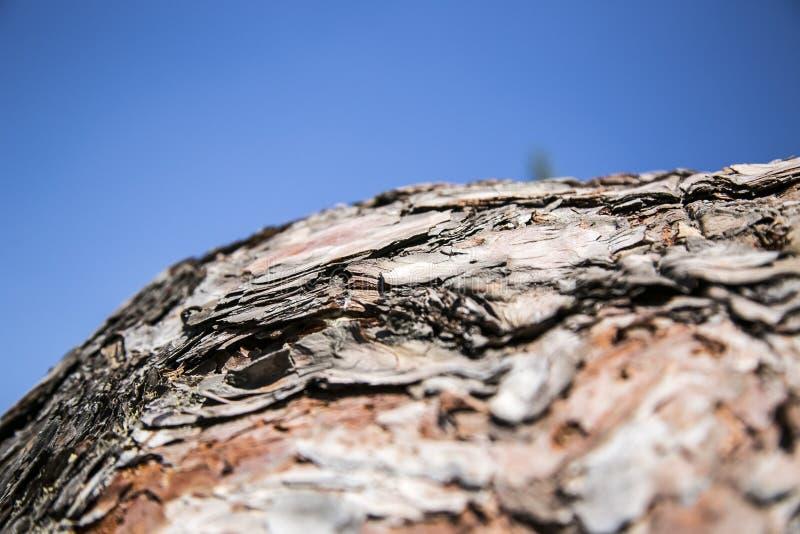 Aserrar un árbol fotografía de archivo