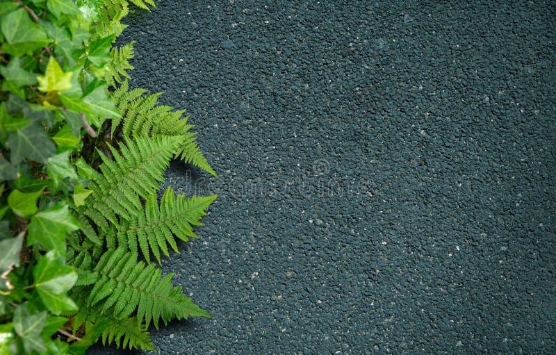 Asfalt i greenery obraz stock