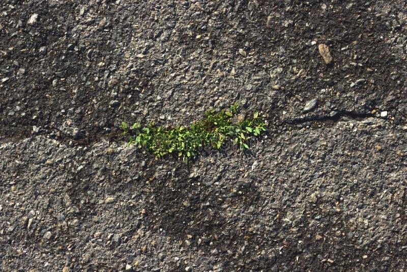 Asfalt med gräs arkivbild