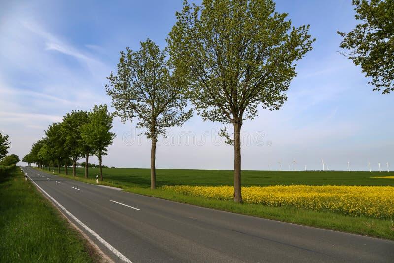 Asfaltera vägen bland fält i bygden av Tyskland royaltyfri fotografi