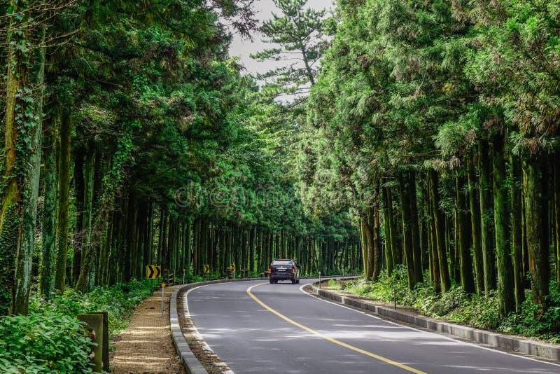Asfaltera vägen med sörjer trädskogen arkivfoto
