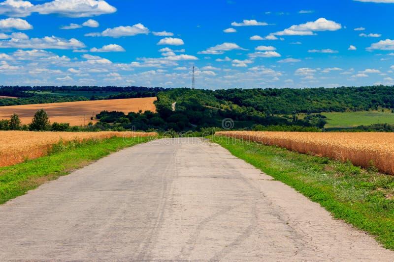 Asfaltlandweg door gouden tarwegebieden en blauwe hemel royalty-vrije stock afbeelding