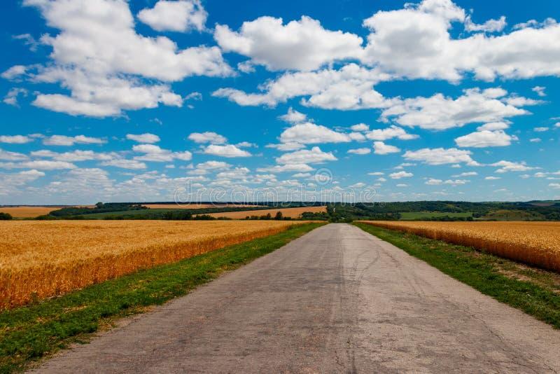 Asfaltlandweg door gouden tarwegebieden en blauwe hemel met witte wolken stock afbeelding