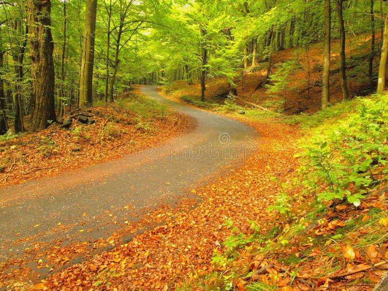 Asfaltowa ścieżka prowadzi wśród bukowych drzew przy pobliskim jesień lasem otaczającym mgłą dzień deszcz obrazy royalty free