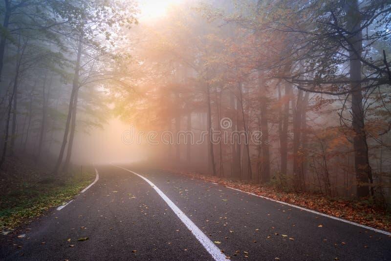 Asfaltowa droga w mgłowym jesień dniu fotografia stock
