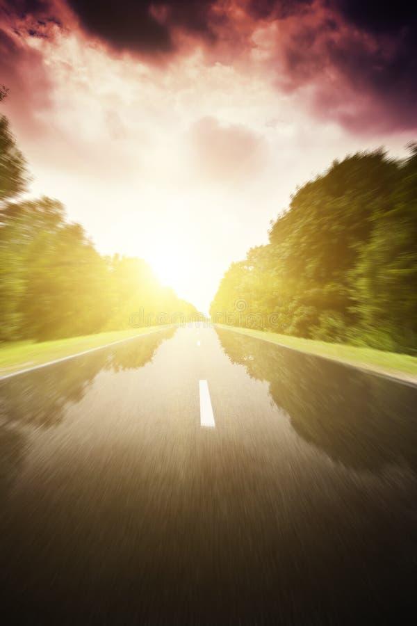 Asfaltowa droga w zielonym lesie. zdjęcia royalty free