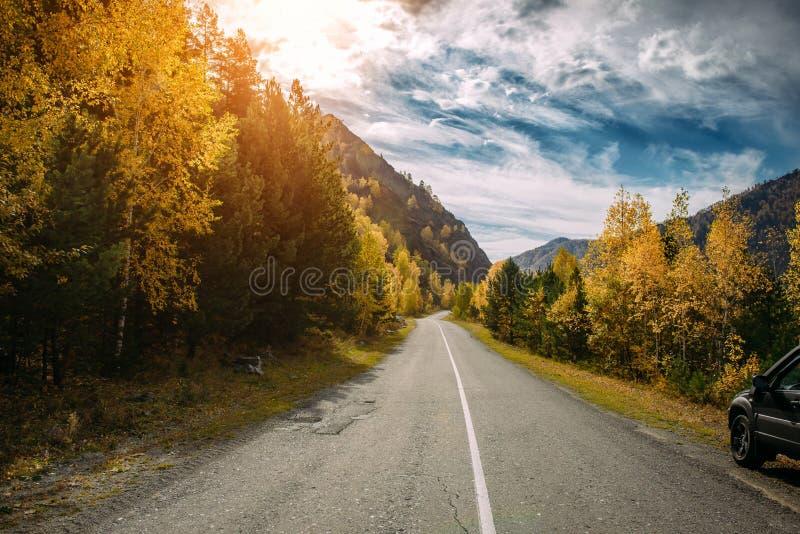 Asfaltowa halna droga wśród żółtych jesieni brzoz wysokich skał w jaskrawych promieniach położenia słońce i Poj?cie aktywnego odp zdjęcia royalty free