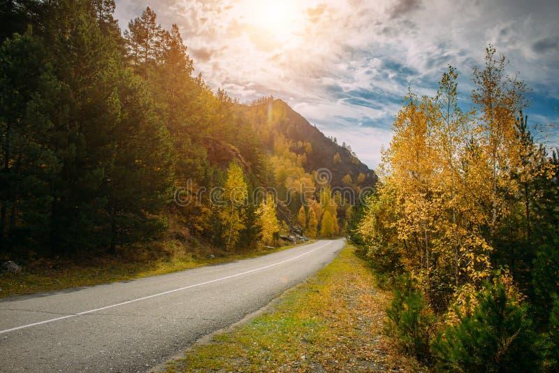 Asfaltowa halna droga wśród żółtych jesieni drzew wysokich skał w jaskrawych promieniach słońce i, Wycieczka samochodowa piękny zdjęcia royalty free