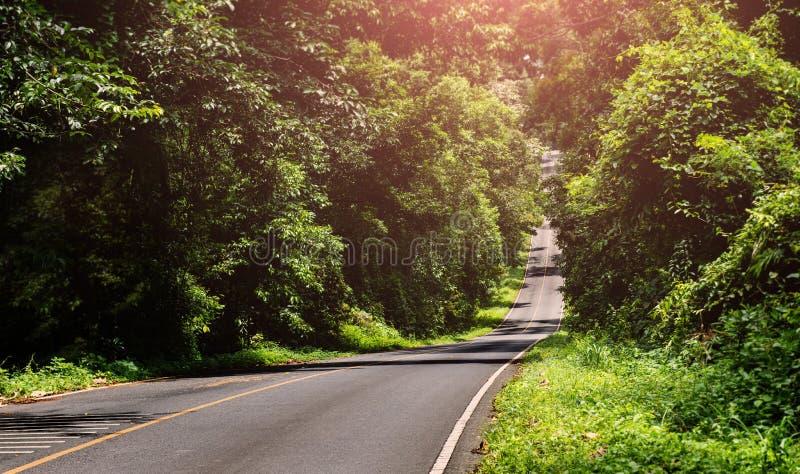 Asfaltroat i nationalparkskog arkivbilder
