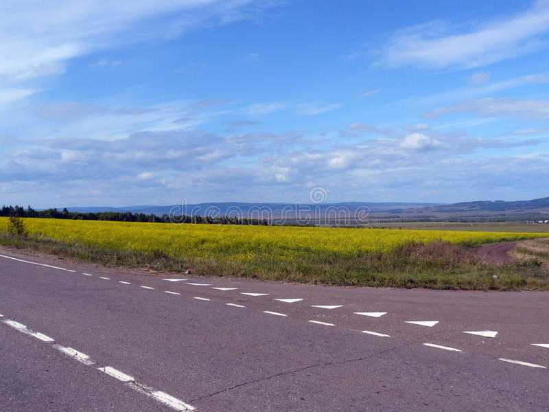 Asfaltująca droga i pole żółci kwiaty obraz royalty free
